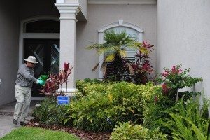 Always Green where Tampa truns for for pest control that focuses on the ourside