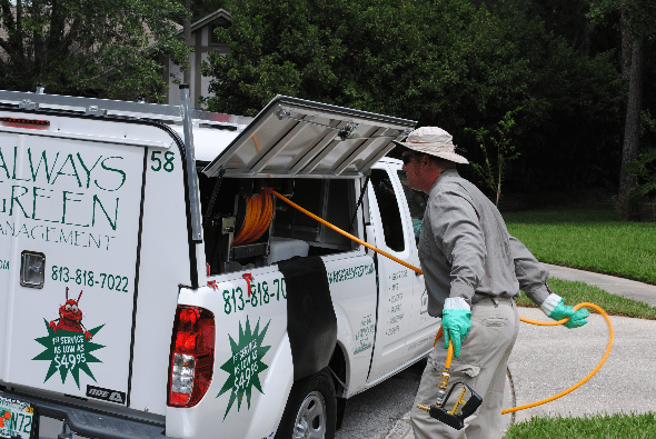 Always Green provide pest control so pest stay out of the house