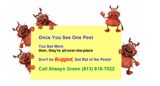 Pest once enter your home or business they want to takeover. Always Green Pest Control will get rid of pests and prevent them from returning